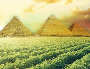 The Future of Agriculture in Egypt